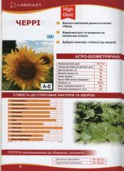 Seeds of euro-layting of sunflower of Cherry