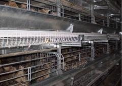 Cellular equipment for cultivation of quails