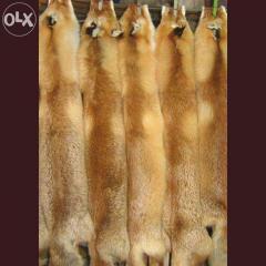 Skins of a fox