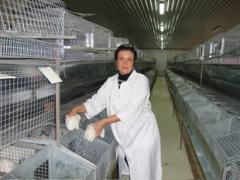 Клетки, оборудование для выращивания кроликов,
