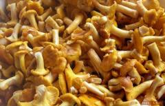 Mushroom the Chanterelle frozen blanched 4 cm,