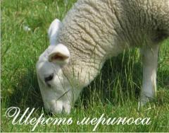Koyun yünü