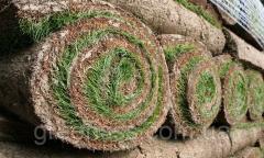 Lawns roll
