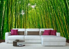 Photowall-paper Bamboo grove