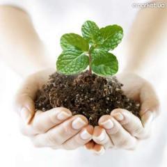 Гербециды, пестициды