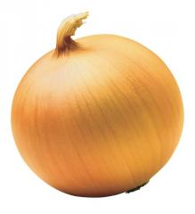 Onions seeds Globe