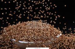 Seeds of buckwheat (buckwheat)