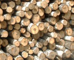 Firewood pine birch