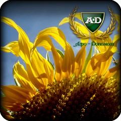 Семена подсолнечника Сварог (под Евролайтнинг) CLEARFIELD®/ Насіння соняшника Сварог (під Євролайтнінг)