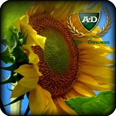 Семена подсолнечника ВЕЛЕС (под гранстар) / Насіння соняшнику ВЕЛЕС (під гранстар)