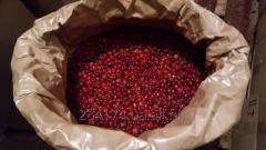 The cranberry frozen (A cranberry fresh)