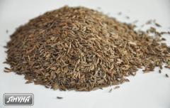 Caraway seeds nas_nnya