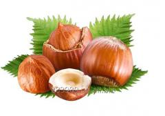 Hazelnut IRBIS LTD