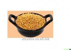 Las semillas de mostaza Spiecies
