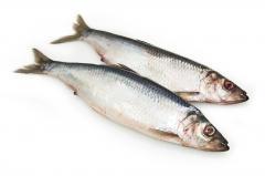 Fresh-frozen herring