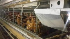Second-hand cage for laying hens, a cage for layers, the cellular equipment,