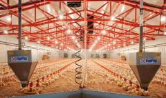 Systemy karmienia farm ptaków