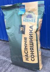 Семена подсолнечника Антей  (под Гранстар 50...