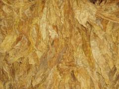 Sheet tobacco, Moldavian 456, Anniversary