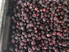 Blackberry (ozhina) frozen