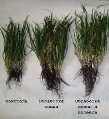 Effective top dressing of plants microfertilizer