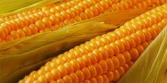 Corn of AS 33009