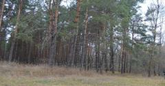 The land in the elite area near Kiev,