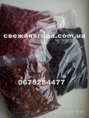 Powder dried blackberry of a grade Tripl Kroun
