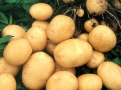 Овощи:картофель
