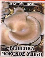 Oyster mushroom mycelium