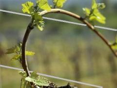 Проволока стальная для подвязвки виноградников, хмеля 1,0-4,0-6,0мм ограждений, сеток
