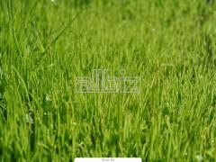 Сельское хозяйство.  Саженцы, семена, продукция