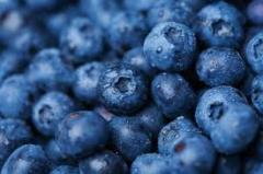 Bilberry wholesale