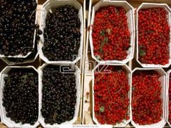 Berries wholesale