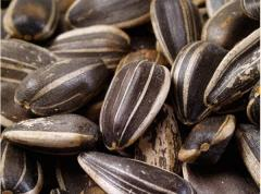 Семена гибрида подсолнечника Ясон,  Дарий, ...