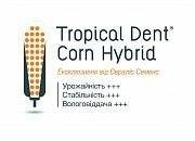 Семена кукурузы ES Cubus ФАО 310 Evralis Simences