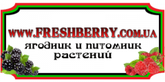Порошок сублемированная ежевика сорта Reuben