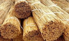 Reed stalks in roofing