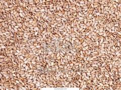 Kernel of seeds of sunflower crude in Ukraine