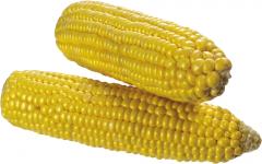 Семена кукурузы Евралис ЕС Олимпус