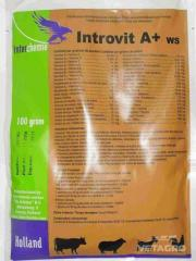 Витамины Интровит А + ОП 1кг