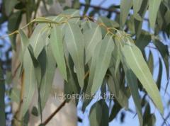 Эвкалипта 80% эфирное масло, натуральное
