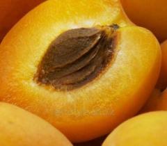 Масло абрикоса,  рафинированное