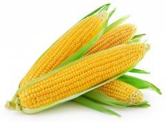 Семена кукуруза Лелека МВ