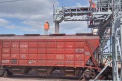 Conveyor loading hopper cars