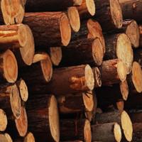 Сосновые дрова в чурках