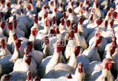 Услуги птицефермы
