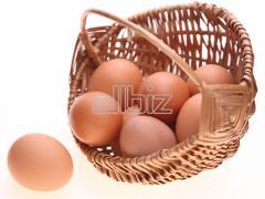 Яйця інкубаційні курей