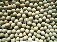 Peas, Ukraine, Export