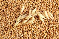 Barley, Ukraine, Expor